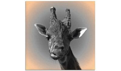 Artland Glasbild »Giraffen Kontakt«, Wildtiere, (1 St.) kaufen