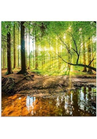 Artland Glasbild »Wald mit Bach« kaufen