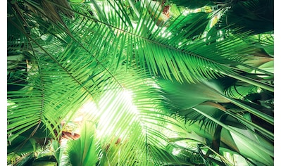 KOMAR Fototapete »Dschungeldach«, Bahnbreite: 50 cm; Motiv bestehend aus mehreren Bahnen kaufen