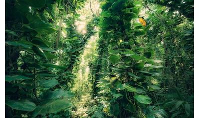 KOMAR Fototapete »Green Leaves«, Bahnbreite: 50 cm; Motiv bestehend aus mehreren Bahnen kaufen