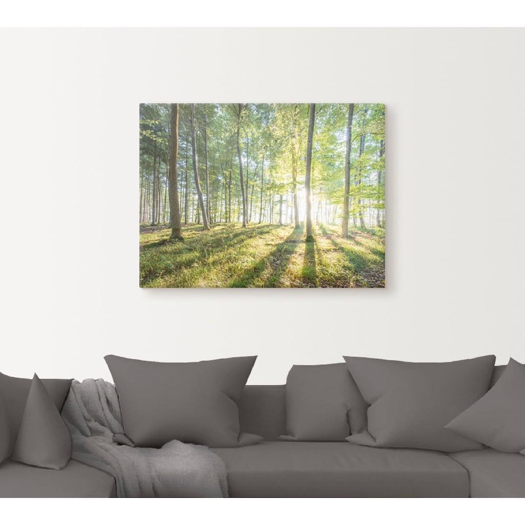 Artland Wandbild »Sonnenaufgang im Wald«, Wald, (1 St.), in vielen Größen & Produktarten -Leinwandbild, Poster, Wandaufkleber / Wandtattoo auch für Badezimmer geeignet