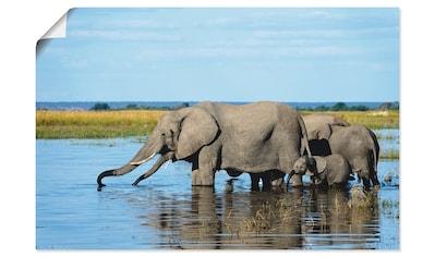 Artland Wandbild »Afrikanische Elefanten im Chobe Fluss« kaufen