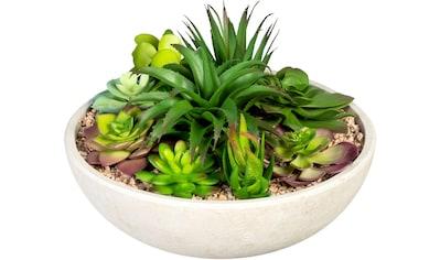 Creativ green Künstliche Zimmerpflanze »Sukkulentenarrangement«, in Schale aus... kaufen