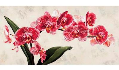 Home affaire Deco-Panel »LUCA VILLA / Purple Queens«, 100/50 cm kaufen