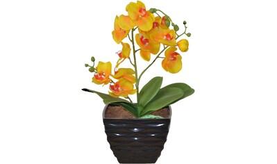 HOFMANN LIVING AND MORE Kunstpflanze kaufen