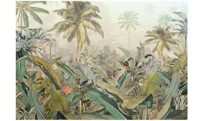Komar Vliestapete »Amazonia 4er«, naturalistisch kaufen