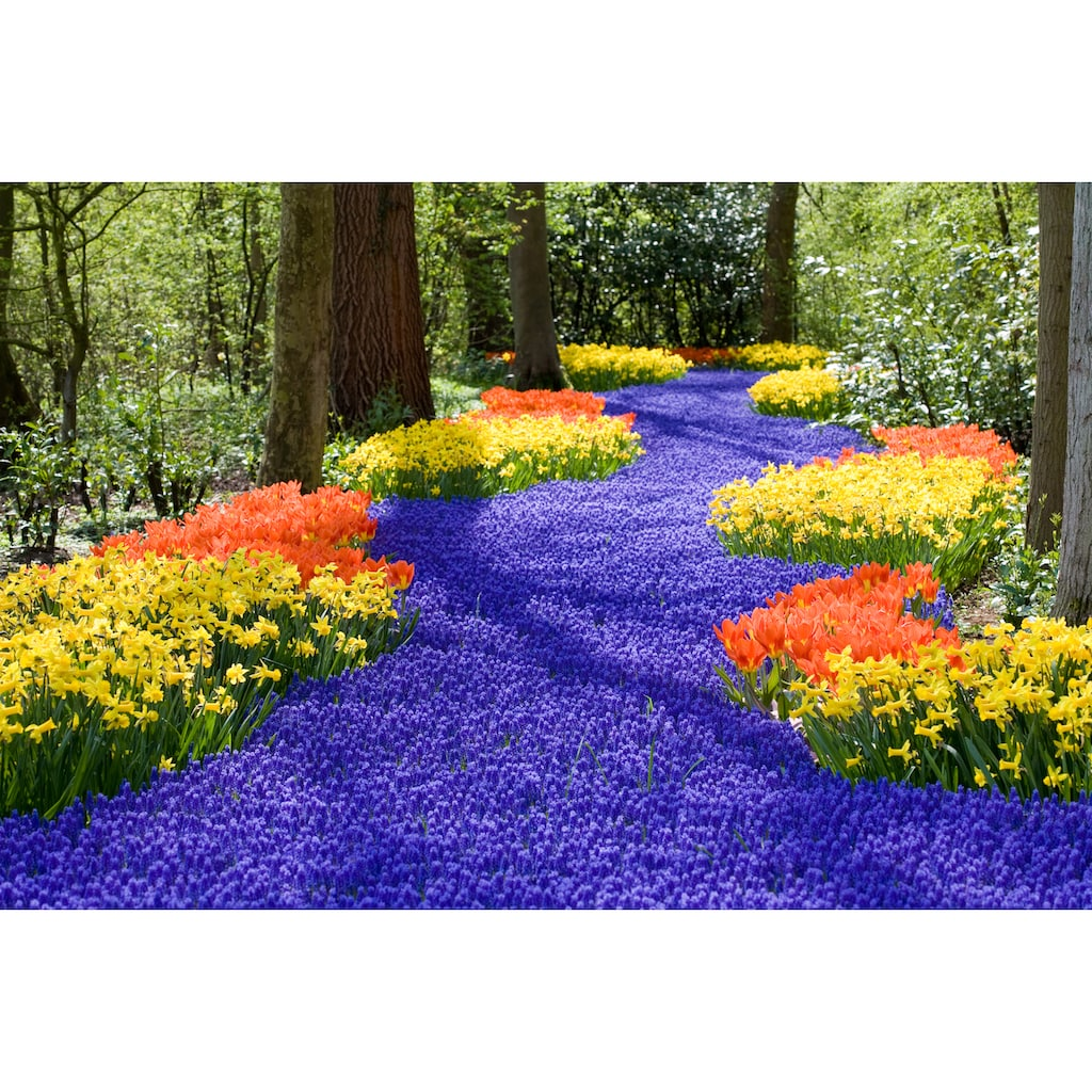 Papermoon Fototapete »Spring Flowers«