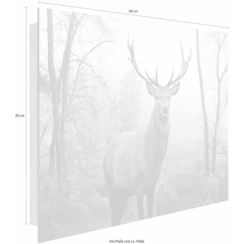 Home affaire Deco-Panel »Hirsch im Wald«, 90/60 cm