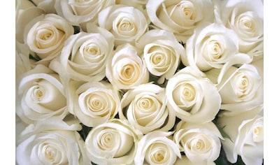 PAPERMOON Fototapete »White Roses«, BlueBack, 7 Bahnen, 350 x 260 cm kaufen