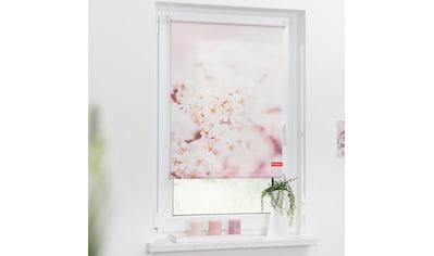 LICHTBLICK Seitenzugrollo »Klemmfix Motiv Kirschblüten«, Lichtschutz, ohne Bohren, freihängend, bedruckt kaufen