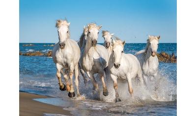 Papermoon Fototapete »Camargue Horses« kaufen