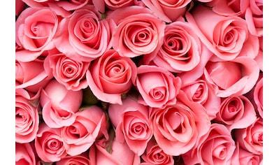 PAPERMOON Fototapete »Pink Rose Flowers«, Vlies, in verschiedenen Größen kaufen