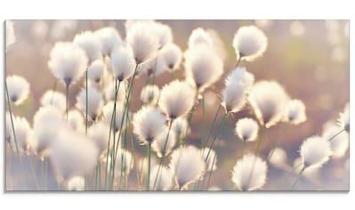 Artland Glasbild »Wollgraszauber im Moor«, Gräser, (1 St.) kaufen