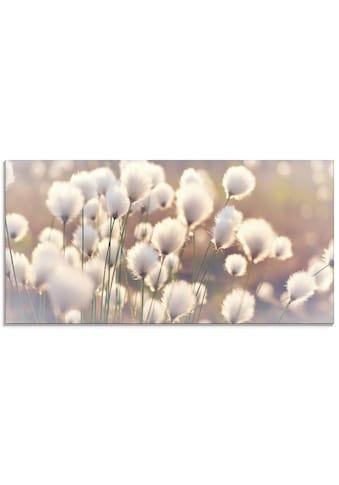Artland Glasbild »Wollgraszauber im Moor« kaufen