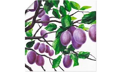 Artland Wandbild »Violette Pflaumen«, Bäume, (1 St.), in vielen Größen & Produktarten... kaufen