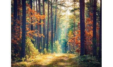 Papermoon Fototapete »Autumn Forest Sun Rays« kaufen