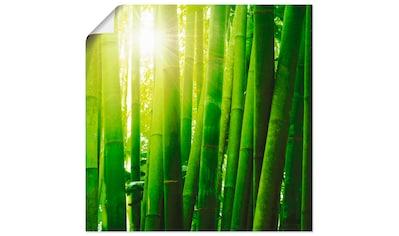 Artland Wandbild »Asiatischer Bambuswald im Morgenlicht« kaufen