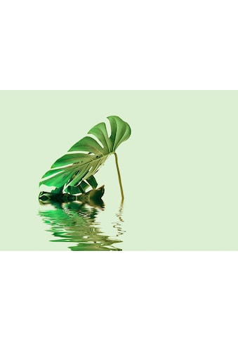 living walls Fototapete »ARTist Monstera Leaf Water«, Fensterblatt, Vlies, glatt kaufen