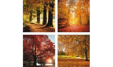 Home affaire Leinwandbild »Herbstlandschaft« (Set) kaufen