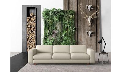 machalke® 4-Sitzer »valentino«, mit breiten Armlehnen, Füße Walnuss, Breite 266 cm, mit GRATIS Ledertasche kaufen