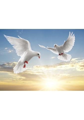 Papermoon Fototapete »White Doves« kaufen