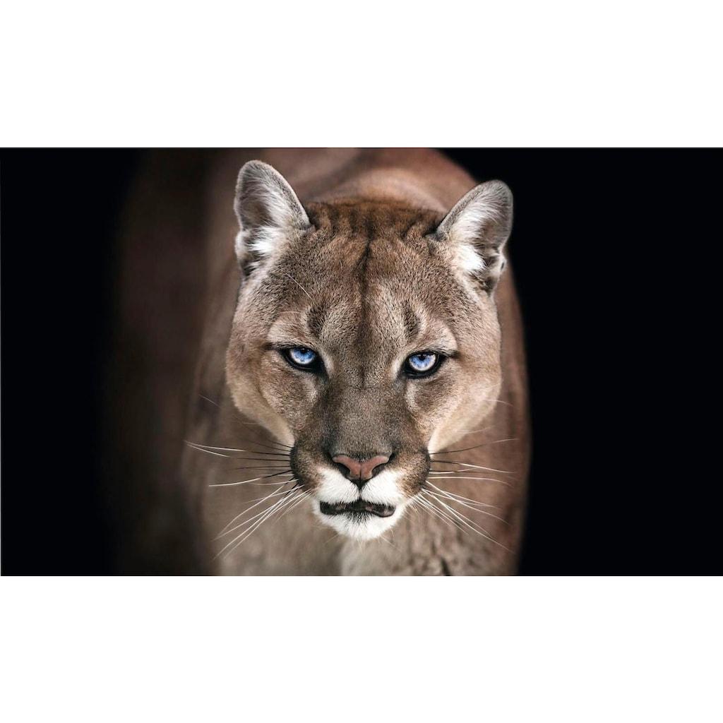 Reinders! Wandbild »Puma«