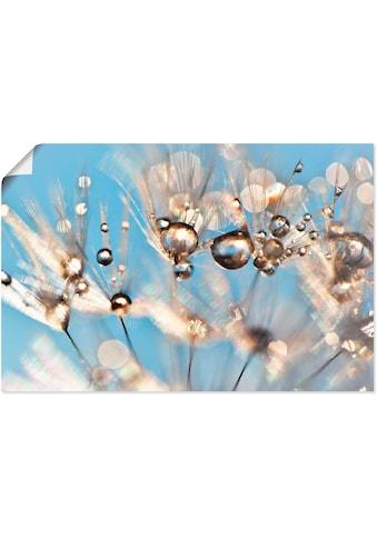 Artland Wandbild »Pusteblume tanzende Tropfen«, Blumen, (1 St.), in vielen Größen &... kaufen