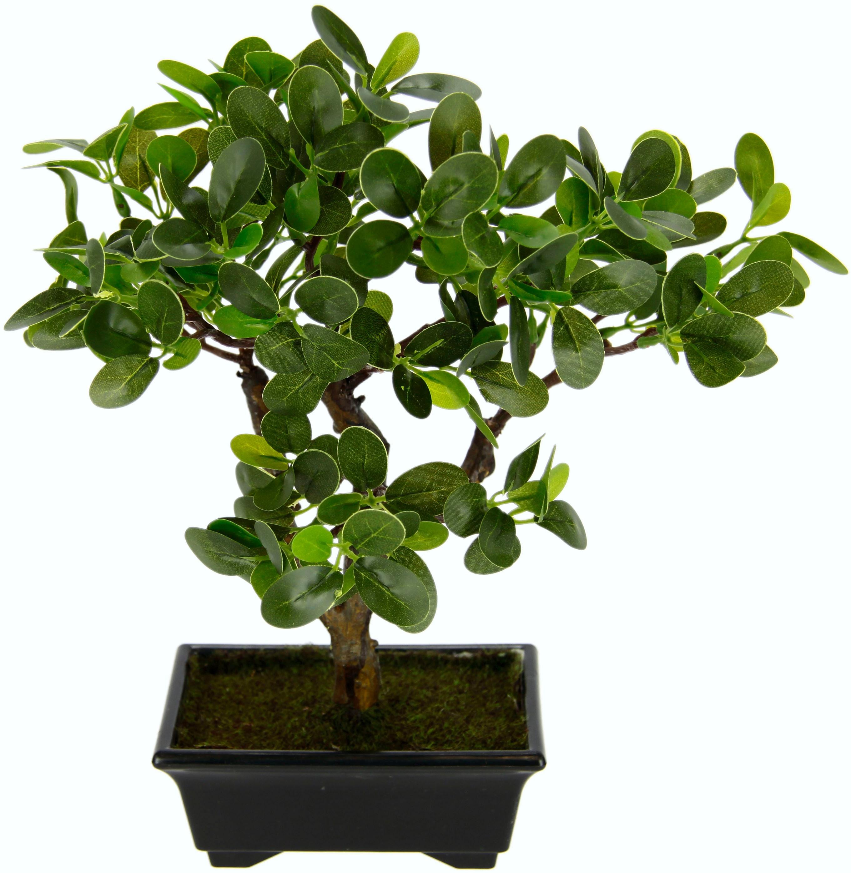 I.GE.A. Kunstbonsai Ginseng-Bonsai, in Bonsaischale aus Kunststoff grün Kunstpflanzen Pflanzen Garten Balkon