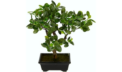 I.GE.A. Kunstbonsai »Ginseng-Bonsai«, in Bonsaischale aus Kunststoff kaufen