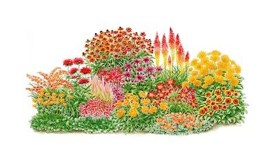 Balkonpflanzen - Set »Sonnenfeuer«, 14 Pflanzen kaufen