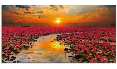Artland Glasbild »Sonnenschein blühende Lotusblume« kaufen
