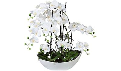 Creativ green Kunstorchidee »Phalaenopsisarrangement, 68cm weiss« (1 Stück) kaufen