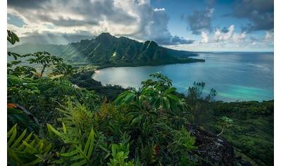 Komar Fototapete »Jurassic Island«, mehrfarbig-natürlich-bedruckt kaufen