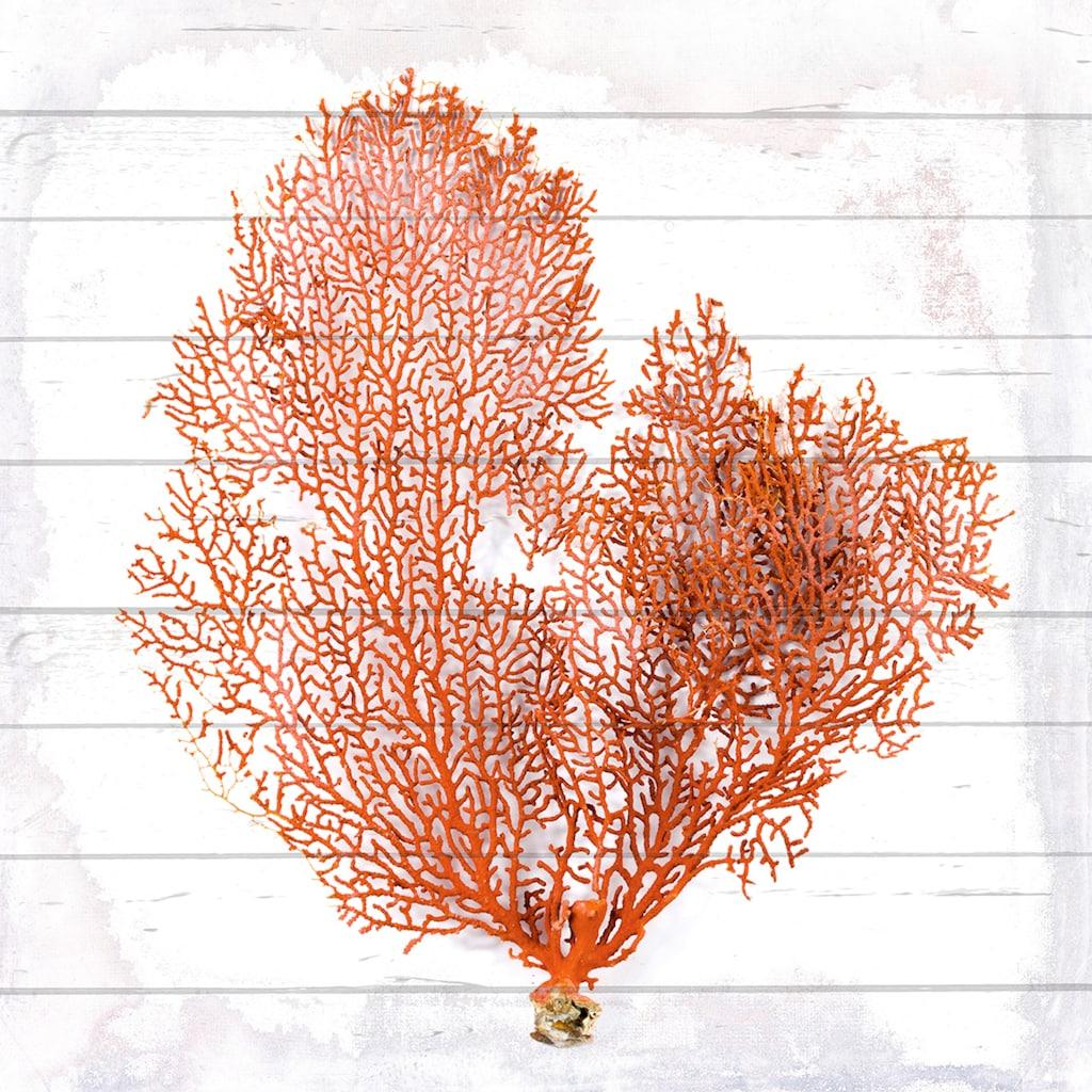 queence Holzbild »Orange Koralle«, 40x40 cm