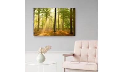 Reinders! Holzbild »Deco Panel 60x90 Sunbeam Forest« kaufen