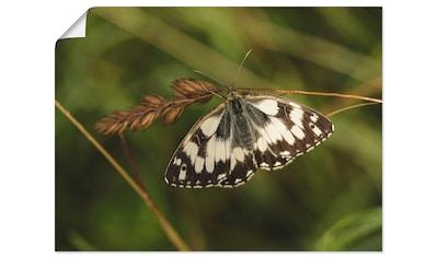 Artland Wandbild »Schmetterling« kaufen