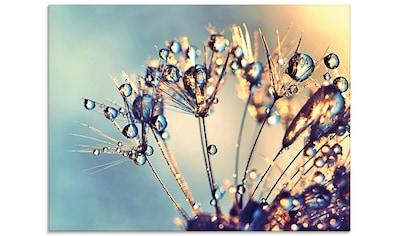Artland Glasbild »Pusteblume Glitzertau« kaufen