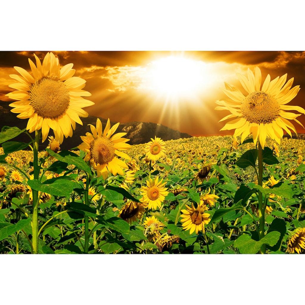 Papermoon Fototapete »Sonnenblumen«, Vliestapete, hochwertiger Digitaldruck