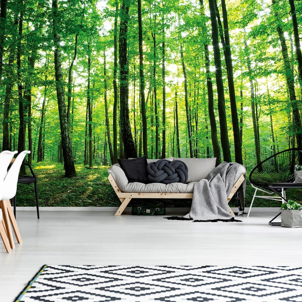Consalnet Fototapete »Grüner Wald«, Motiv