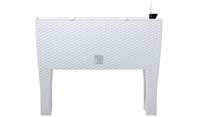 Prosperplast Pflanzkübel »Rato case high«, BxTxH: 80x33x62 cm kaufen