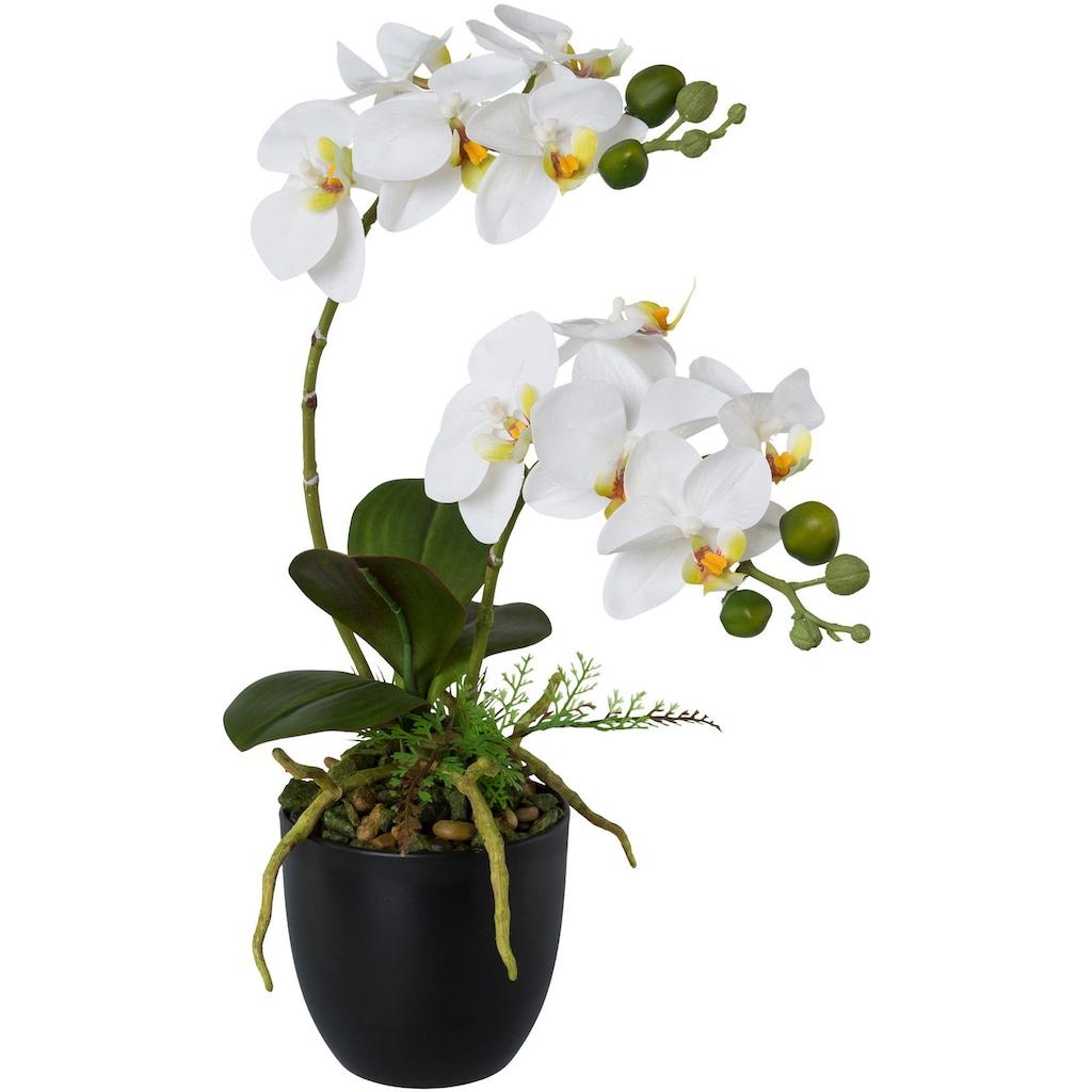 Creativ green Kunstorchidee »Phalaenopsis«, im Kunststofftopf