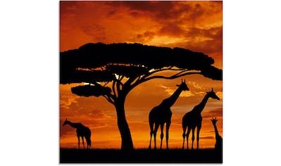 Artland Glasbild »Herde von Giraffen im Sonnenuntergang«, Wildtiere, (1 St.) kaufen