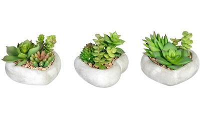 Creativ green Künstliche Zimmerpflanze »Sukkulentenarrangement«, in Zementschale, 3er Set kaufen