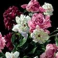 queence Kissenhülle »Blütenzweige«, (1 St.)