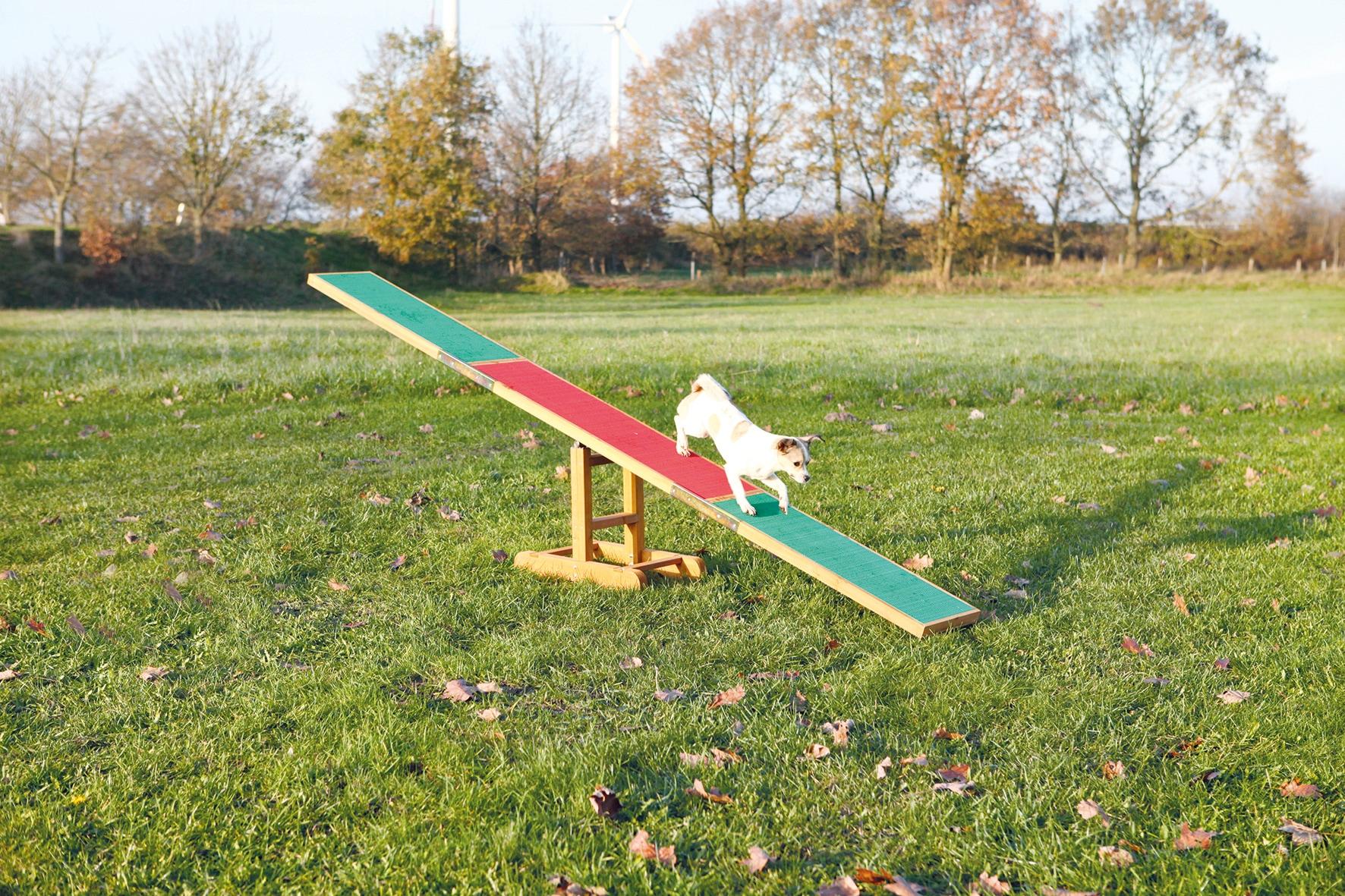 TRIXIE Agility-Wippe, Holz bunt Hundespielzeug Hund Tierbedarf Agility-Wippe