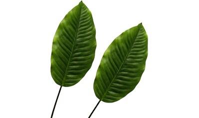 Creativ green Künstliche Zimmerpflanze »Dieffenbachiablatt« kaufen
