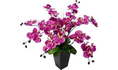 Kunstpflanze »Phalaenopsis im Topf« kaufen