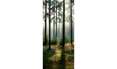 Papermoon Fototapete »Forest - Türtapete«, matt, Vlies, 2 Bahnen, 90 x 200 cm kaufen