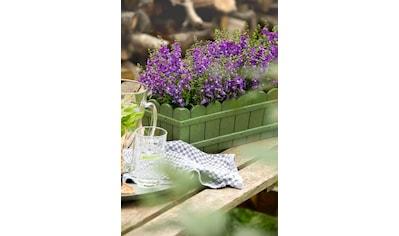 Blumenkasten »Country«, grün kaufen