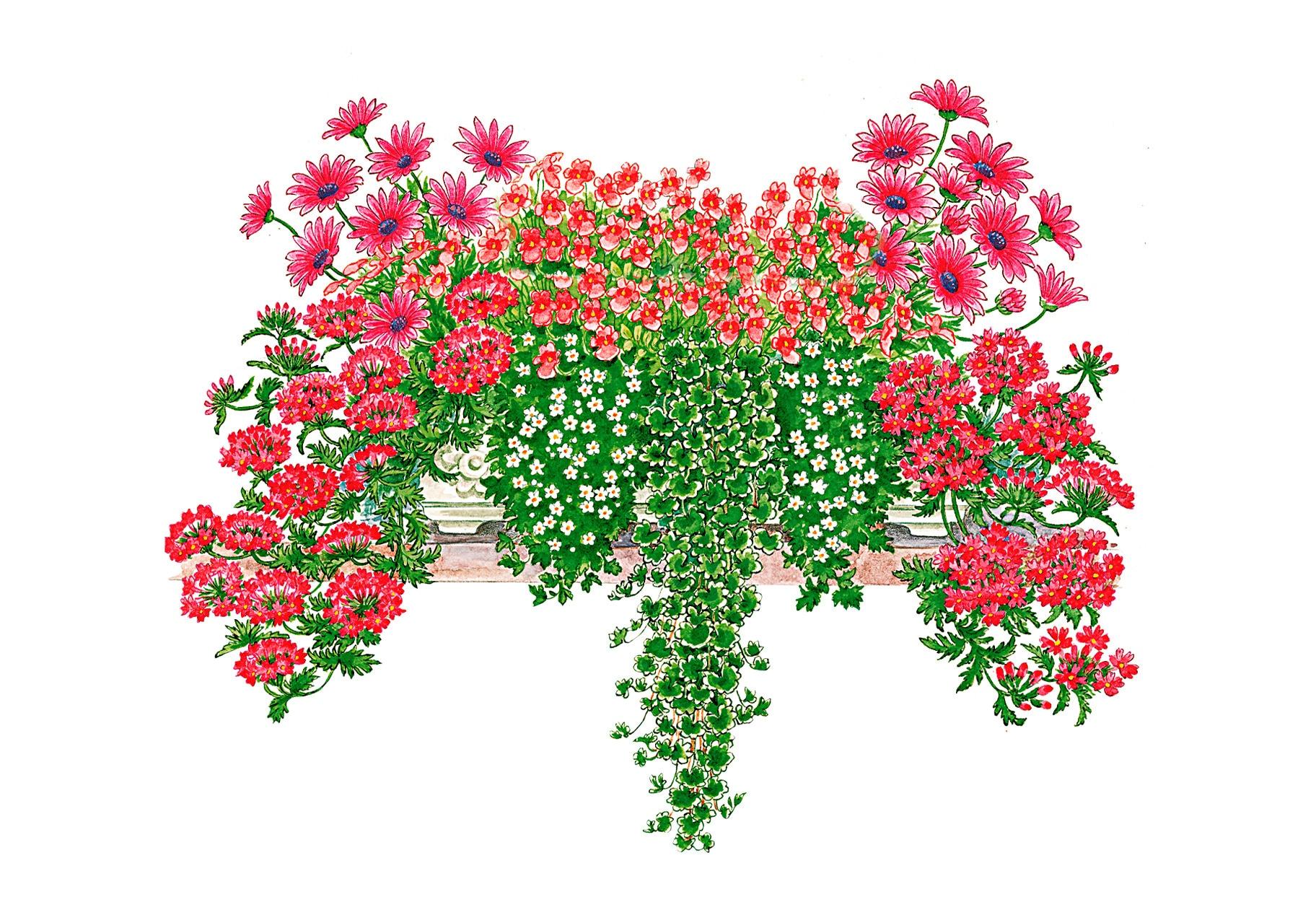 BCM Balkonpflanze Romantische Kombi, 18 Pflanzen mit Erde bunt Balkonpflanzen Garten Balkon